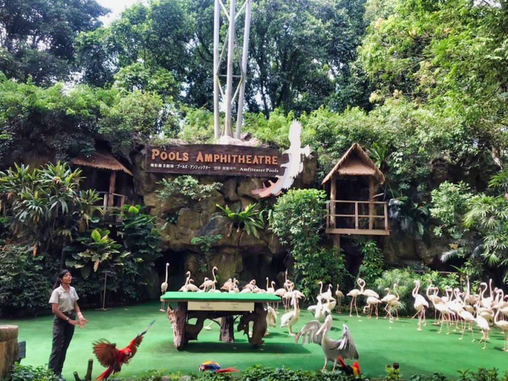 High Flyers Jurong Bird Park