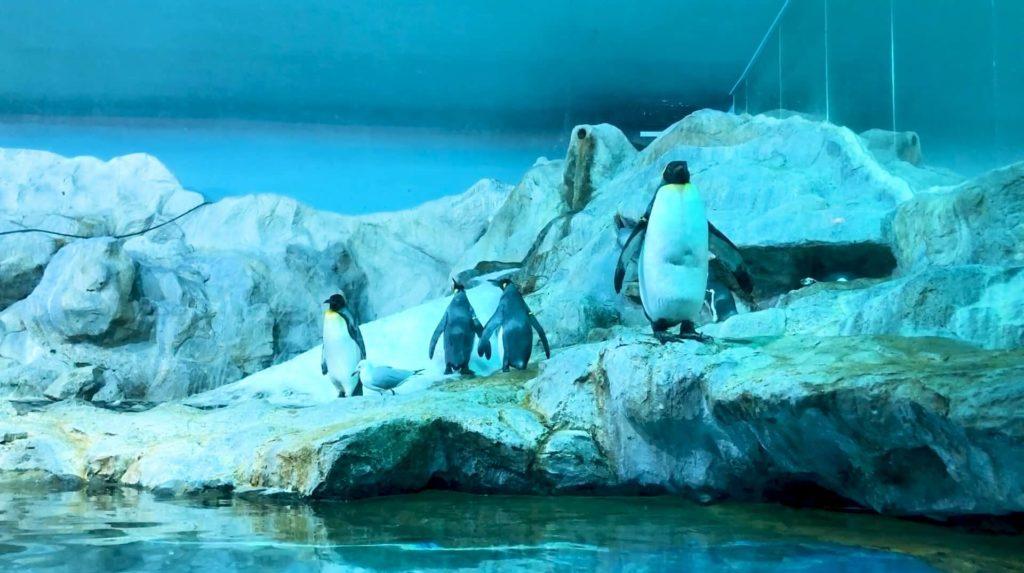 King of Penguin